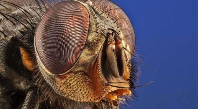 Insect focusing